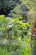 Heligan Photos - The Lost Gardens Of Heligan, Uk by Dr Keith Wheeler
