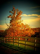 Northern Virginia Photos - The Orange Tree by Joyce  Kimble Smith