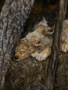 Wildlife Art Painting Originals - The Pine Needle Bed by Nonie Wideman