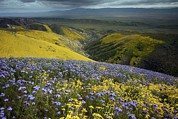 Carrizo Plain Prints - The Temblor Range, California Print by Bob Gibbons