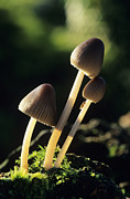 Toadstools Metal Prints - Toadstools Metal Print by David Aubrey