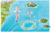 Flying Seagull Framed Prints - Types Of Islands Framed Print by Gary Hincks