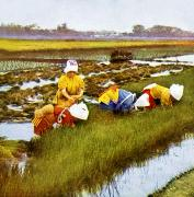 Rice Field Paintings - Vintage Japanese Art by Hawaiian Legacy Archive - Printscapes