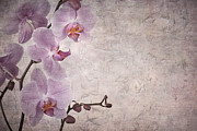 Parchment Art - Vintage orchids by Jane Rix