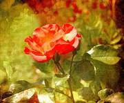 Vintage Rose Print by Cathie Tyler