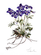 Isolated Drawings Prints - Violets Print by Danuta Bennett
