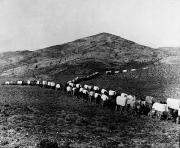 Wagon Train Photos - Wagon Train by Granger