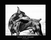 Black Dog Print Posters - Watchful Poster by Rita Kay Adams