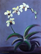 Calla Lilly Originals - White Orchids by Gina De Gorna