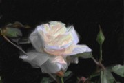 Pein Air Prints - White Rose Painting Print by Don  Wright