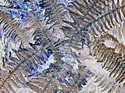 Digital Modified Prints - Winter Fern  Print by Heiko Koehrer-Wagner