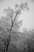 Wintry Photo Prints - Winter Print by Gabriela Insuratelu