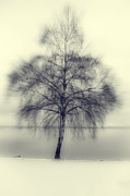Snowy Night Art - Winter Tree by Joana Kruse