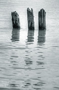 Dolphins Art - Wooden Piles by Joana Kruse