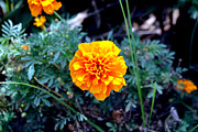 Winter Flower Photos - Yellow Flower by Denis Shah