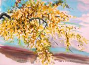 Yellow Leaves Drawings Framed Prints - Yellow Maple Framed Print by John  Williams
