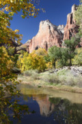 Patriarch Prints - Zion National Park in Autumn Print by Pierre Leclerc