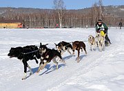 2010 Limited North American Sled Dog Race Print by Gary Whitton