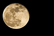 Supermoon Photos - 2012 Super Moon by Elizabeth Hart