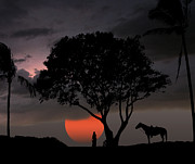 Equine Photo Posters - 2154 Poster by Peter Holme III