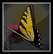 The Colors Of Butterflies Posters - Butterfly Collection Poster by Debra     Vatalaro