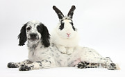 Puppy And Rabbit Print by Mark Taylor
