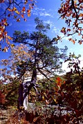 Southern Illinois Photos - Rim Rock Trail - Illinois by Jack R Brock