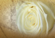 Timeless Design Prints - Wedding Rose Collection  Print by Debra     Vatalaro