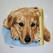 Golden Retriever Art Pastels Prints - 24k Print by Debbie Stonebraker