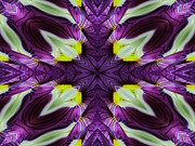 Flower Kaleidoscopes Posters - Pansy Poster by Michele Caporaso