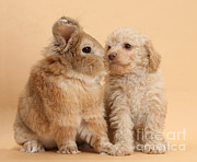 Toy Animals Framed Prints - Puppy And Rabbit Framed Print by Mark Taylor