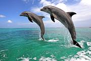 Delfin (grosser Tuemmler) Print by Tier Und Naturfotografie J und C Sohns