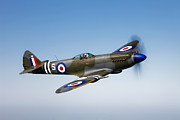 Supermarine Spitfire Posters - A Supermarine Spitfire Mk-18 In Flight Poster by Scott Germain