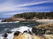 Ledge Posters - Acadia National Park - Maine USA Poster by Erin Paul Donovan