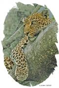 African Cat Prints - African Leopard Print by Larry Linton