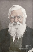 Alfred Posters - Alfred Russel Wallace, Welsh Naturalist Poster by Science Source