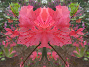 Blend Photos - Altered Azaleas by Michele Caporaso