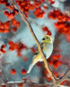 Watercolor Effect Framed Prints - American Goldfinch Framed Print by Betty LaRue