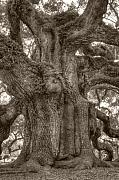 Angel Greeting Cards - Angel Oak Live Oak Tree by Dustin K Ryan