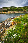 Overcast Art - Atlantic coast in Newfoundland by Elena Elisseeva