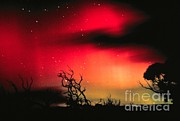 {atmospheric Conditions} Posters - Aurora Australis, Southern Lights Poster by Science Source