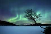 Bare Trees Prints - Aurora Borealis Over Sandvannet Lake Print by Arild Heitmann