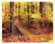 Gina Signore Framed Prints - Autumn footbridge Framed Print by Gina Signore