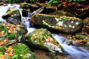 Mountain Stream Photo Posters - Autumn Mountain Stream Poster by Thomas R Fletcher