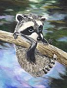 Sue Ervin - Baby Raccoon