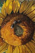 3 Bees Print by Peter Muzyka