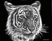 Bengal Digital Art - Bengal Tiger by Larry Linton