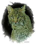 Bobcat Art Framed Prints - Bobcat Framed Print by Larry Linton