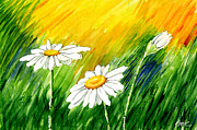 Nature Framed Prints Paintings - 3 Brilliant Daisies by Ann Troe