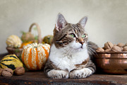 Cute Cat Posters - Cat and Pumpkins Poster by Nailia Schwarz